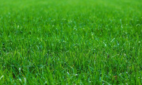 grass-3948063_1920